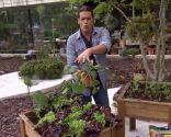 El calabacín, hortaliza que no hay que plantar nunca en una mesa de cultivo