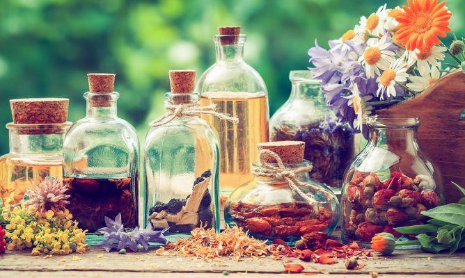 10 plantas medicinales imprescindibles en tu hogar