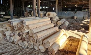 Operação da PF investiga extração e comercialização ilegal de madeira em terras indígenas em RO e MT