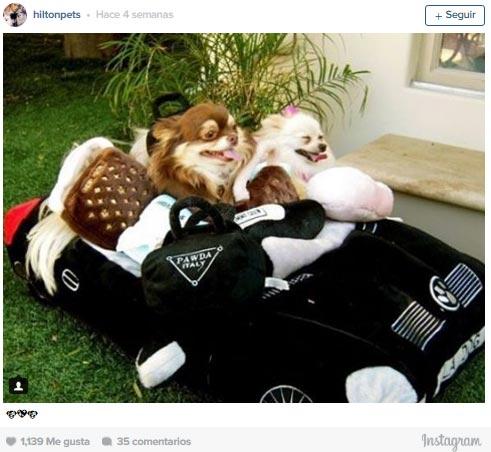 Resultado de imagen para fotos de perros en paris