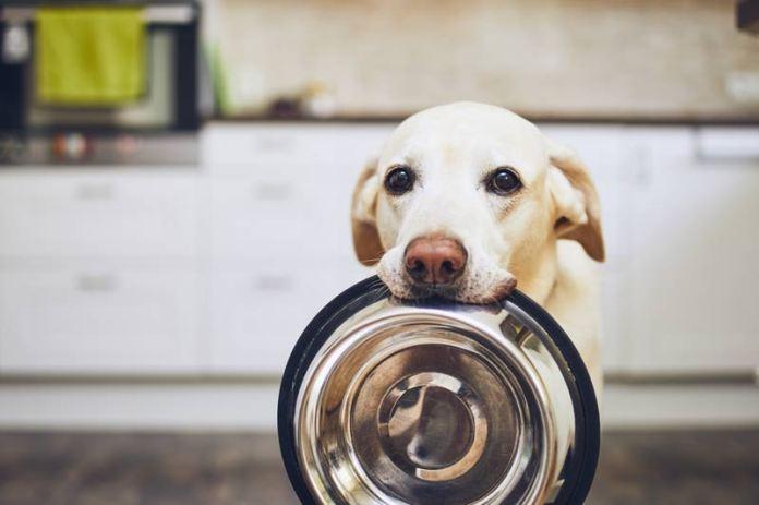 perro esperando su comida