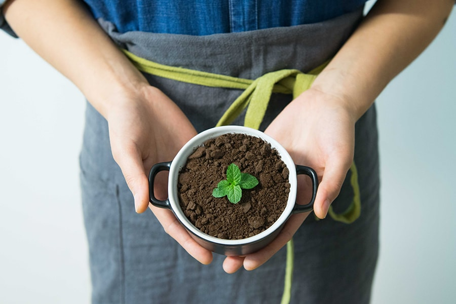 Holar Blog 9 Best Uses of Coffee Grounds You Most Likely Didn't Know