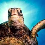 Sea Turtle Image by Roy Niswanger