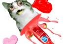 Komor Zoltán: Valentin-napi macskasíkosító