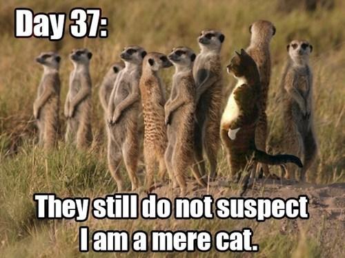 mere cat
