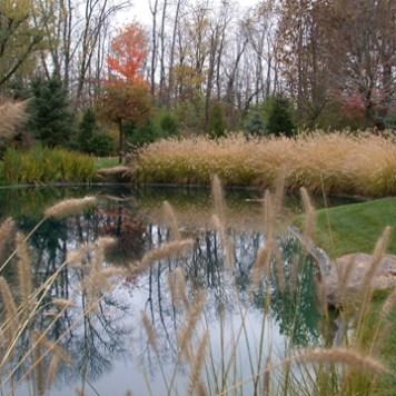Native Pond