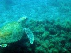 Diving on Crete