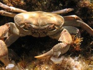 Learn Diving in the Mediterenean Sea