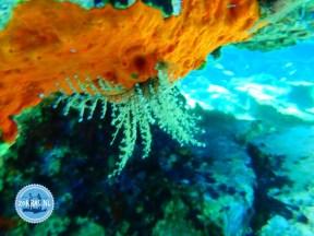 nice-snorkel-holidays-crete-summer 2021