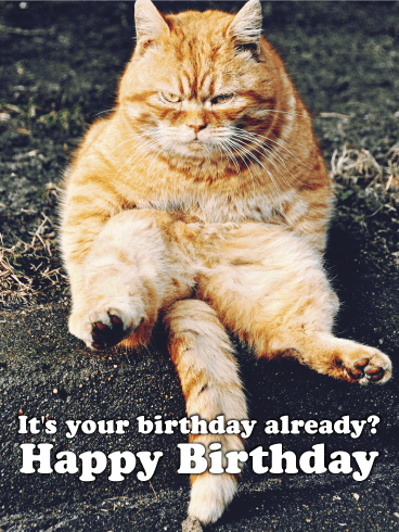 Grumpy Kitty Funny Birthday Card Birthday Amp Greeting Cards By Davia