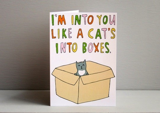 cats-boxes