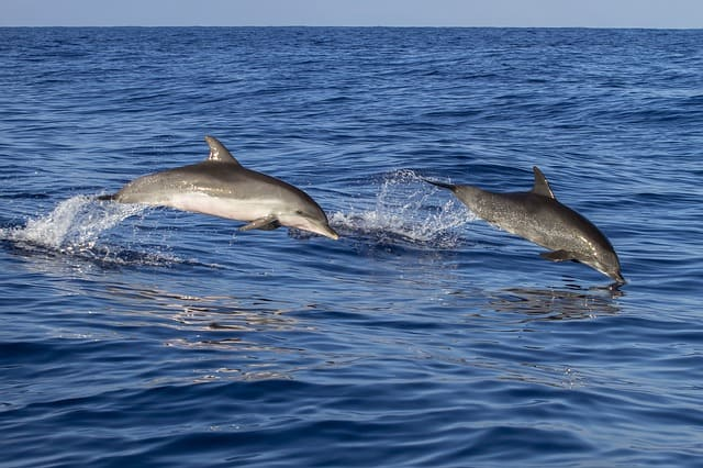 Things To Do In Puri Char Dham India: Dolphin Watching In Chilika Lake