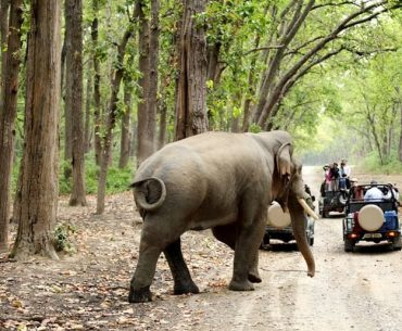 Complete Travel Guide To Jim Corbett National Park