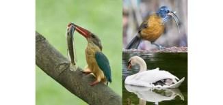 Bird sanctuary London