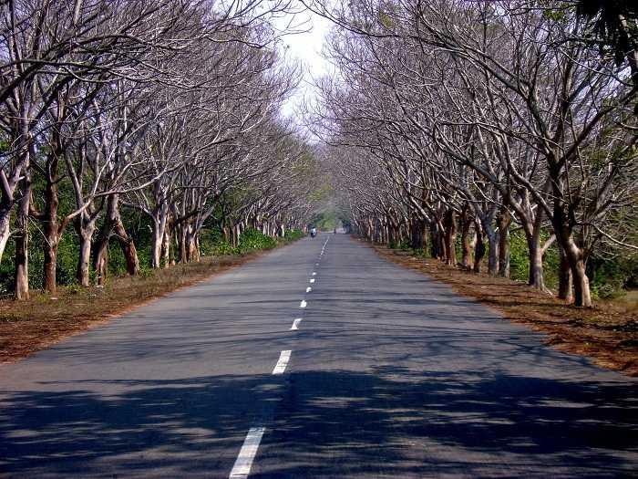 road trip Puri to Konark