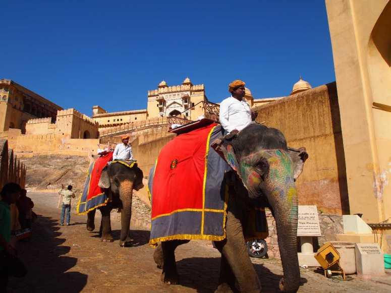 Elephant Ride in Jaipur | Amber Fort Elephant Ride Details