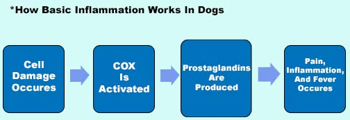Dog Inflammation Process