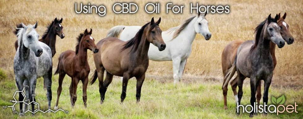 CBD Oil For Horses