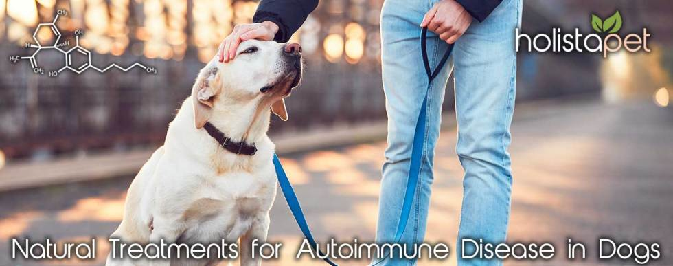 natural remedies for autoimmune disease in dogs