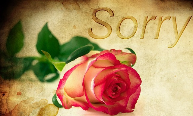forgiveness and healing red rose