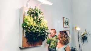 Indoor-Farming