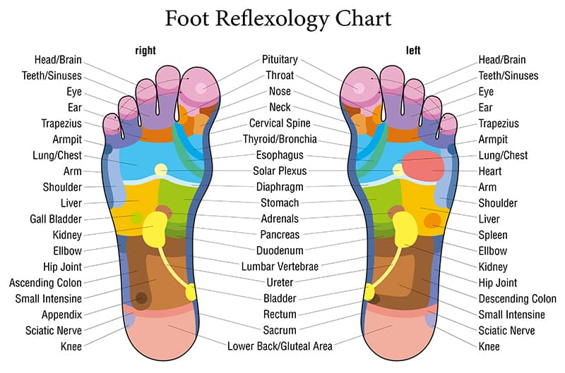 foot reflexology map