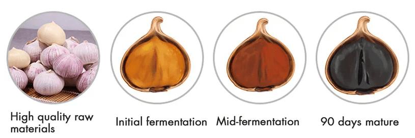 black garlic Black Garlic – Benefits and How to Make