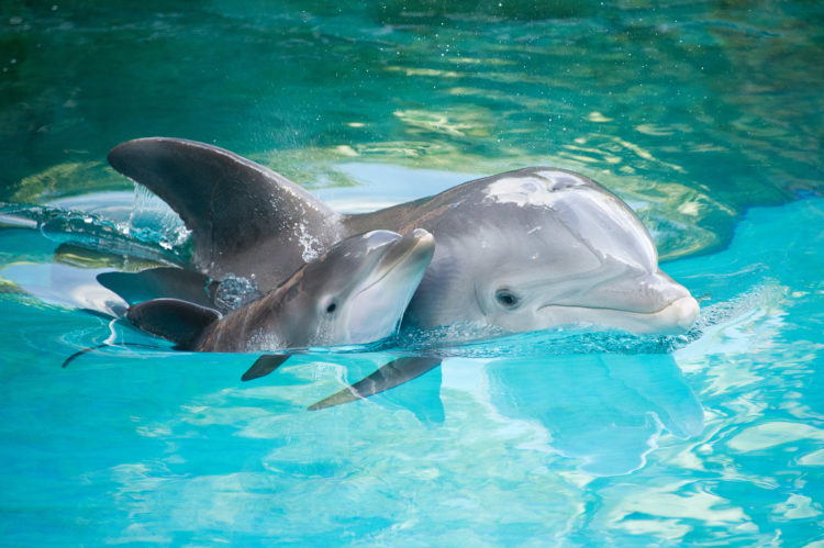 Pesticide Ingredients Found in Dolphins, Bird and Fish Raise Serious Concerns