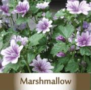 marshmallow2