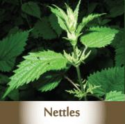 nettles2
