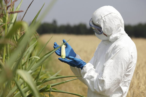 US Court of Appeals: states and counties can ban GMO crops despite federal laws