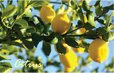 Citrus2 Modified citrus pectin can minimize heavy metal toxicity, reveals study
