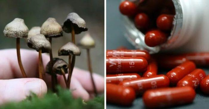 magic mushrooms big pharma TMU 700x365 1560775907725 Magic mushrooms could replace antidepressants within five years
