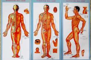 human meridian system