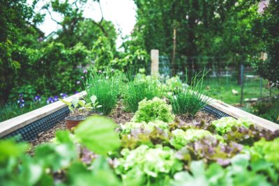 Ground level view of vegetable and herb garden
