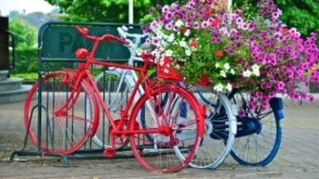 Image result for Pictures the Netherlands bikes