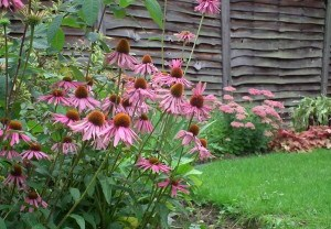 The award for my favourite plant of the year goes too..