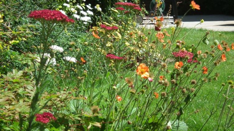 10 Top Tips on how to do a planting scheme.
