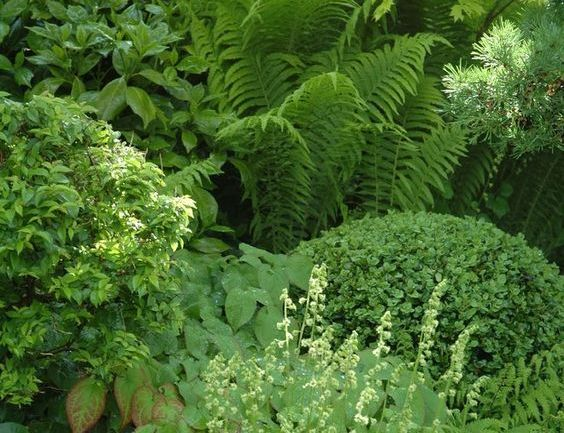 Things to know when you have a garden in shade: 2