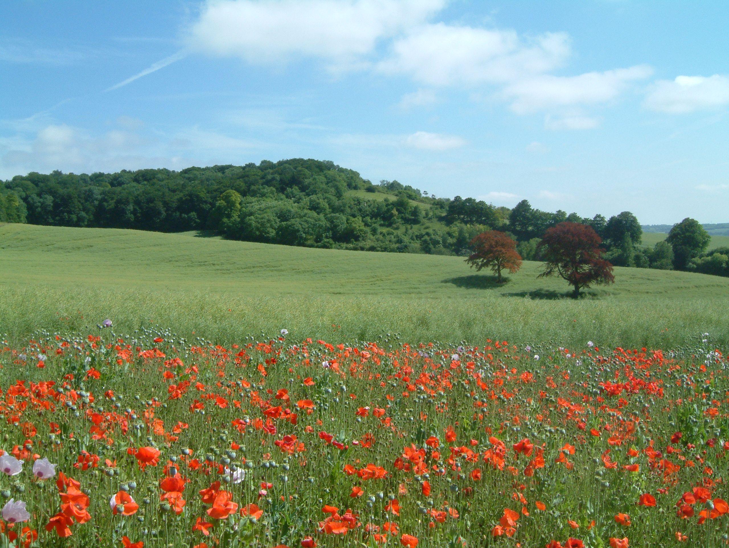 Hollingbourne Field