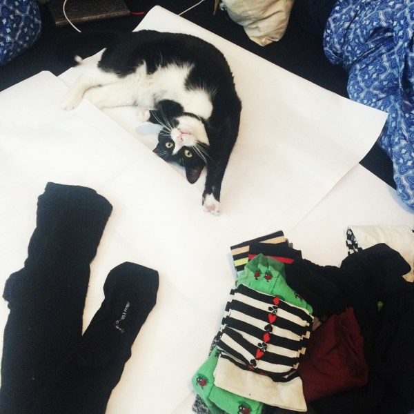 kitten assistant