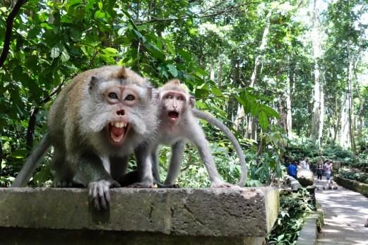 ubud-monkey-forest-ydc-bali-tour1