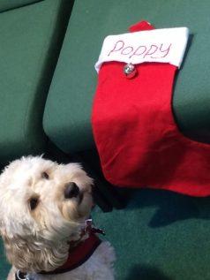 Poppy stocking