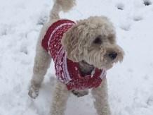 poppy snow2