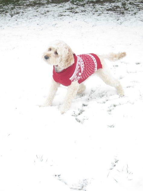 Poppy snow (1)