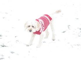 Poppy snow (2)