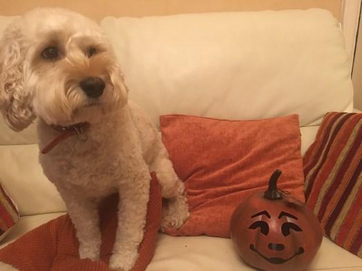 Poppy pumpkin