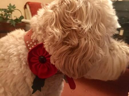 Poppy poppy (1)