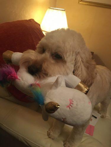 Poppy unicorn 2