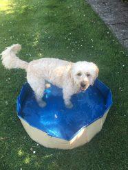 Poppy pool (4)